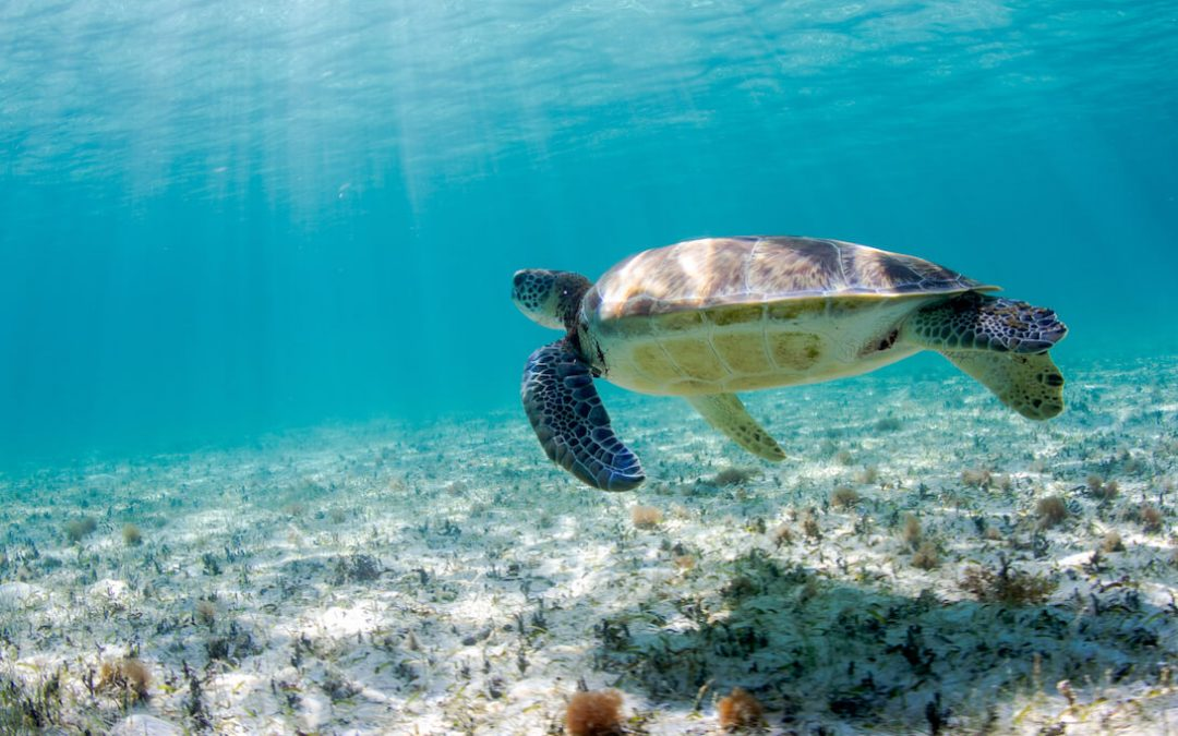 Salvando el Oceano